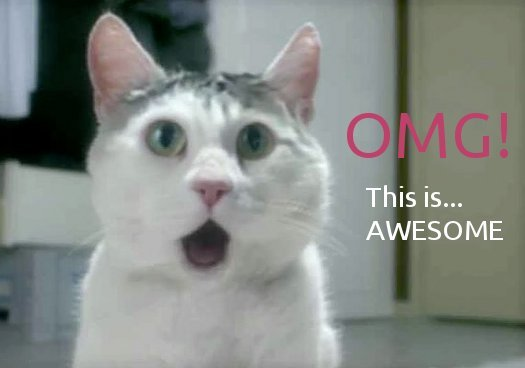 omg-cat-awesome-shocked-stunned.jpg